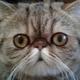 Аватар пользователя rtfmzr
