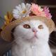 Аватар пользователя basja
