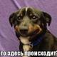 Аватар пользователя Nattaha