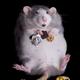 Аватар пользователя Mouse33