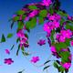 Аватар пользователя Varma