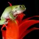 Аватар пользователя lora.vort