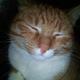 Аватар пользователя Bertolet