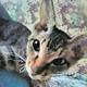 Аватар пользователя koshhkamusi