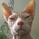 Аватар пользователя PolSV