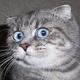 Аватар пользователя Snallygaster