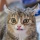 Аватар пользователя Tazovod102