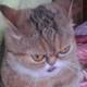 Аватар пользователя sanguiniy