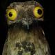 Аватар пользователя martin197