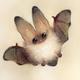Аватар пользователя Pansies