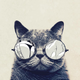 Аватар пользователя zhmurikoff