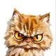 Аватар пользователя Ritosik88
