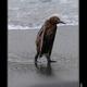 Аватар пользователя listiki