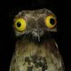 Аватар пользователя Papay111
