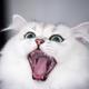 Аватар пользователя GLAS