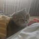 Аватар пользователя KittyTheCat