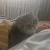 KittyTheCat