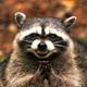 Аватар пользователя Zaist