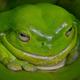 Аватар пользователя Levsha78