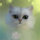 Аватар пользователя pupikisa