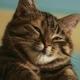 Аватар пользователя Kidmode