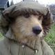 Аватар пользователя Thisisozhi