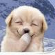 Аватар пользователя Solly4