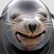 Аватар пользователя ZhevaniiKrot