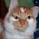Аватар пользователя TroubleKate