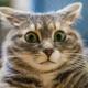 Аватар пользователя Andreich707