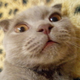 Аватар пользователя karkarich22222