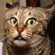 Аватар пользователя KHomi