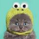 Аватар пользователя flutbet
