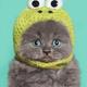 Аватар пользователя Irisa1006