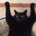 Coalcat