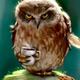 Аватар пользователя WerewolfSXE