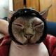 Аватар пользователя mVoskr