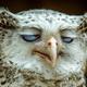 Аватар пользователя Snotvornoe