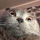 Аватар пользователя Kotobaka