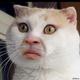 Аватар пользователя AnikaAnka