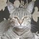 Аватар пользователя SvetoMrak