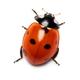 Аватар пользователя momonsan