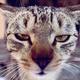 Аватар пользователя sanbondub