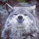 Аватар пользователя dyryodhana