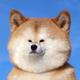 Аватар пользователя alexpresto