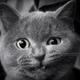 Аватар пользователя Grundik11