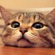 Аватар пользователя Dimsant
