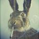 Аватар пользователя Vesennevich