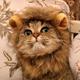 Аватар пользователя Mage0Sage