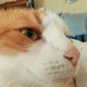 Аватар пользователя BlankFile
